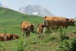 Mountain ecosystems / Ecosistemas de montaña